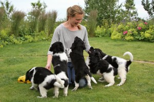 Christina Savage with five of Jelske's puppies